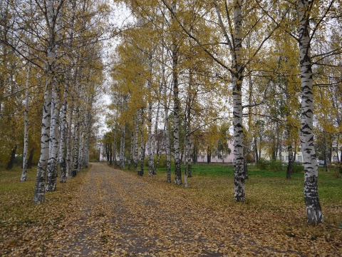 Унылая осень